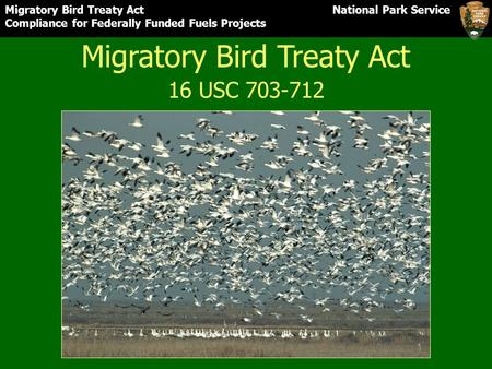 Migratory Bird Treaty Act National Park Service Compliance for Federally Funded Fuels Projects Migratory Bird Treaty Act 16 USC 703-712.