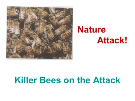 Killer Bees on the Attack Nature Attack!. 1. How are bees useful to people? 2. Are you afraid of bees? Why or why not? 3. When do bees sting a person?