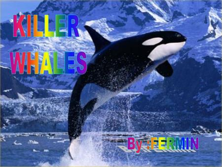 Some things I want to know about killer whales are: I want to know what killer whales eat, how they swim and how long they live. Some things I know about.