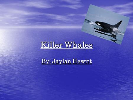 Killer Whales By: Jaylan Hewitt. Introduction Imagine that you were in a boat that sailed to the arctic ocean. Suddenly, something bumps you. You look.