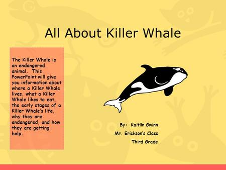 All About Killer Whale By: Kaitlin Gwinn Mr. Erickson's Class Third Grade The Killer Whale is an endangered animal. This PowerPoint will give you information.