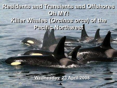 Residents and Transients and Offshores Oh MY! Killer Whales (Orcinus orca) of the Pacific Northwest Residents and Transients and Offshores Oh MY! Killer.