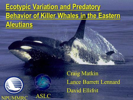 1 Craig Matkin Lance Barrett Lennard David Ellifrit Ecotypic Variation and Predatory Behavior of Killer Whales in the Eastern Aleutians ASLC NPUMMRC.