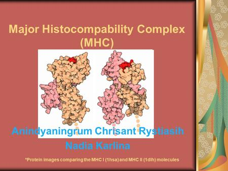 Major Histocompability Complex (MHC) Anindyaningrum Chrisant Rystiasih Nadia Karlina *Protein images comparing the MHC I (1hsa) and MHC II (1dlh) molecules.
