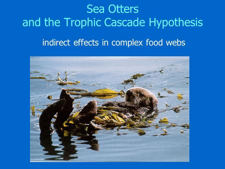 Sea Otters and the Trophic Cascade Hypothesis indirect effects in complex food webs.