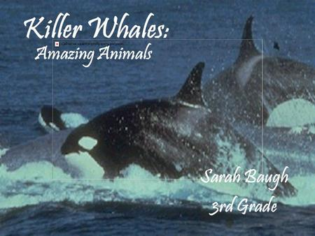 Killer Whales: Sarah Baugh 3rd Grade Amazing Animals.