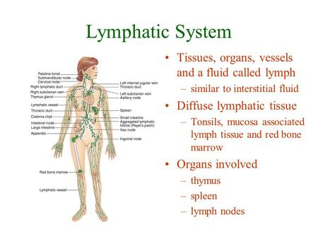 Lymphatic System Tissues, organs, vessels and a fluid called lymph