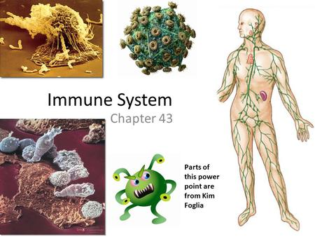 Immune System Chapter 43 Parts of this power point are from Kim Foglia.
