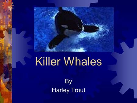 Killer Whales By Harley Trout. What Killer Whales Look Like Killer whales are black and white. Killer whales have 4 big fins.They have a hole on the top.
