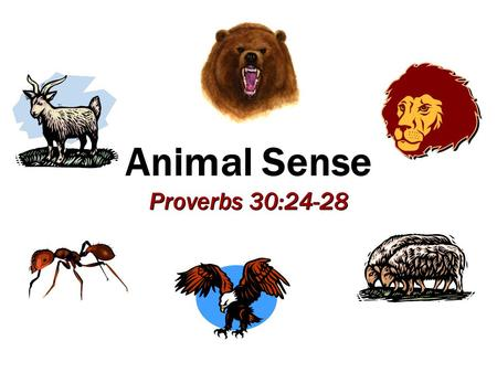 Animal Sense Proverbs 30:24-28. 2 Sheep and wolves Snakes and doves Matt. 10:16 Sheep and wolves Snakes and doves Matt. 10:16 Jesus Used Animals to Teach.