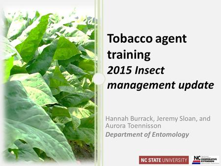 Tobacco agent training 2015 Insect management update Hannah Burrack, Jeremy Sloan, and Aurora Toennisson Department of Entomology.