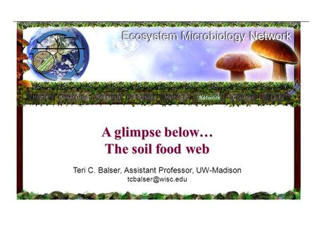 A glimpse below… The soil food web Teri C. Balser, Assistant Professor, UW-Madison
