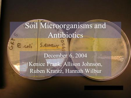 Soil Microorganisms and Antibiotics December 6, 2004 Kenice Frank, Allison Johnson, Ruben Krantz, Hannah Wilbur.