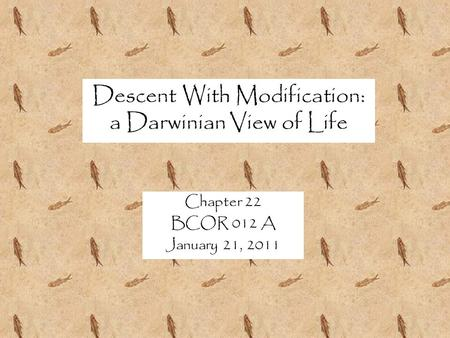 Descent With Modification: a Darwinian View of Life Chapter 22 BCOR 012 A January 21, 2011.
