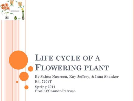 L IFE CYCLE OF A F LOWERING PLANT By Saima Naureen, Kay Jeffrey, & Inna Shenker Ed. 7204T Spring 2011 Prof. O'Connor-Petruso.