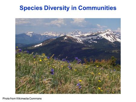 Species Diversity in Communities Photo from Wikimedia Commons.