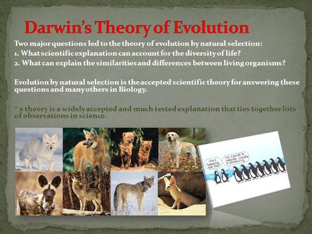Diversity essay evolution life selected