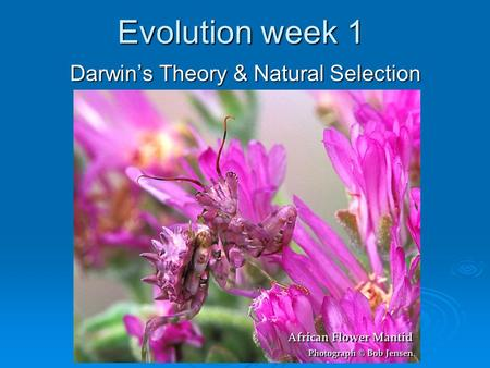 Evolution week 1 Darwin's Theory & Natural Selection.