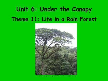 Unit 6: Under the Canopy Theme 11: Life in a Rain Forest