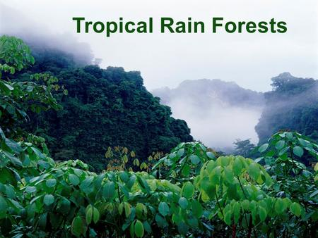 Tropical Rain Forests What are they? Where are they? How are they structured? What plants and animals live there?