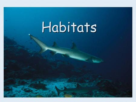 Habitats. What Are We Learning? Standards: S3L1c. Identify features of animals that allow them to live and thrive in different regions of Georgia. S3L1b.