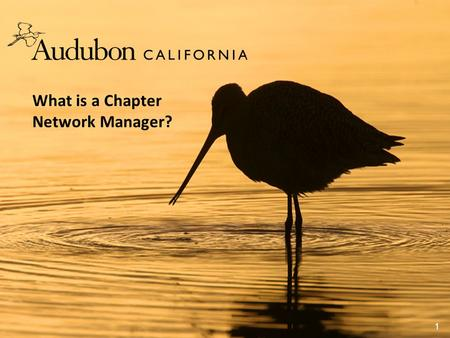 What is a Chapter Network Manager? 1. Audubon California's vision is that bird populations will thrive in the future, together with all Californians.