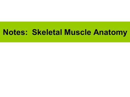 Notes: Skeletal Muscle Anatomy