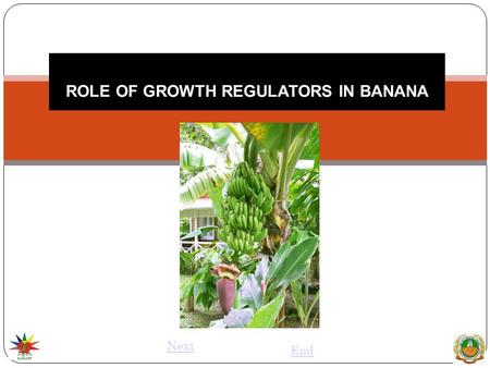 ROLE OF GROWTH REGULATORS IN BANANA Next End. PLANT HORMONE Plant hormone has been defined as organic substance produced naturally in the higher plants,
