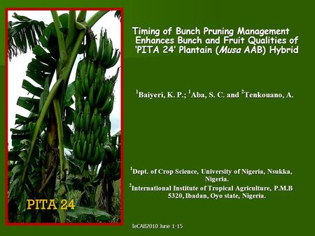 IeCAB2010 June 1-15 Timing of Bunch Pruning Management Enhances Bunch and Fruit Qualities of 'PITA 24' Plantain (Musa AAB) Hybrid 1 Baiyeri, K. P.; 1 Aba,