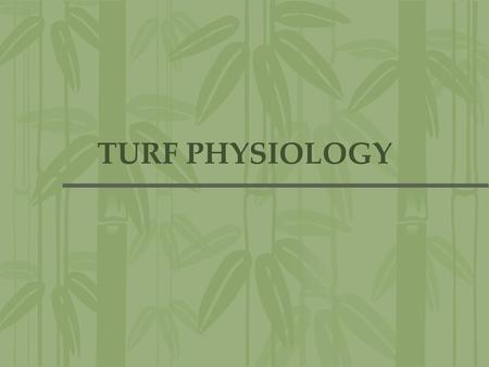 TURF PHYSIOLOGY.