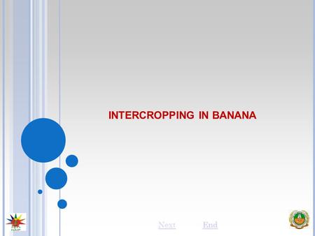 INTERCROPPING IN BANANA NextEnd. INTRODUCTION Bananas are mostly grown by small and marginal farmers. With holdings less than a hectare, they can hardly.