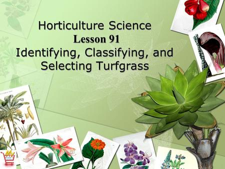 Horticulture Science Lesson 91 Identifying, Classifying, and Selecting Turfgrass.