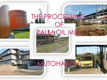 THE PROCESSING OF PALM OIL MILL MUTOHAROH