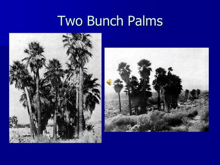 Two Bunch Palms. March 1939 – Who Has Seen This? The Desert Magazine.