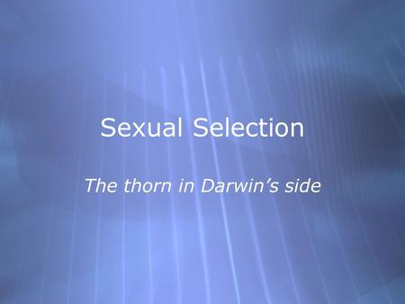 Sexual Selection The thorn in Darwin's side. Types of Sexual Selection  #1 - Intra-sexual competition:  Males compete with males for mating partners.
