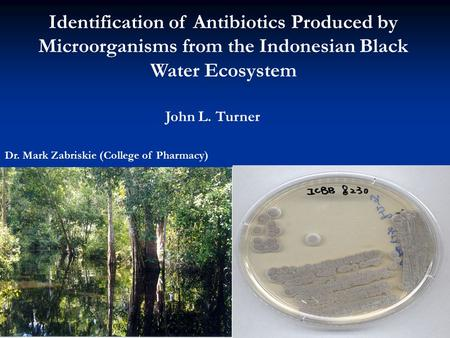Identification of Antibiotics Produced by Microorganisms from the Indonesian Black Water Ecosystem John L. Turner Professor: Mark Zabriskie (College of.