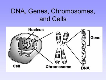 DNA, Genes, Chromosomes, and Cells. Your body is made of trillions of cells, each one with a nucleus.