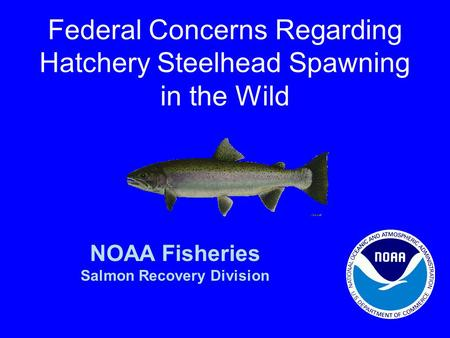 Federal Concerns Regarding Hatchery Steelhead Spawning in the Wild NOAA Fisheries Salmon Recovery Division.