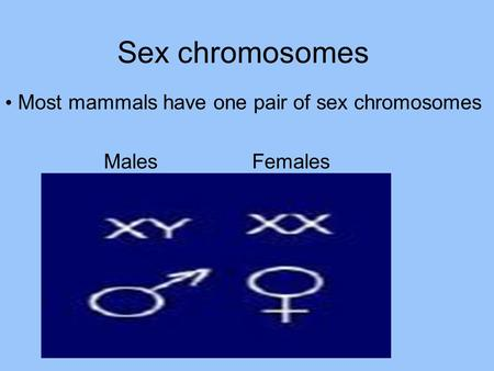 Sex chromosomes Most mammals have one pair of sex chromosomes Males Females.