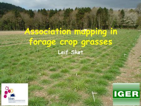 Association mapping in forage crop grasses Leif Skøt.