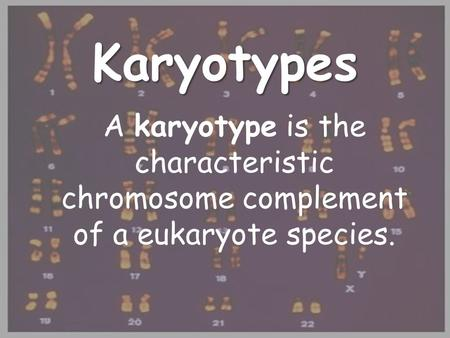 Karyotypes A karyotype is the characteristic chromosome complement of a eukaryote species.