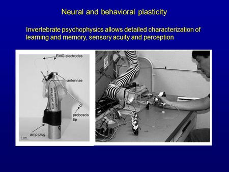 Invertebrate psychophysics allows detailed characterization of learning and memory, sensory acuity and perception Neural and behavioral plasticity.