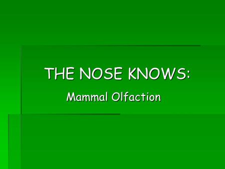 THE NOSE KNOWS: Mammal Olfaction Mammal Olfaction.