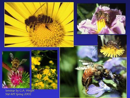 Seminar by G.A. Wright Stat 601 Spring 2002. While flying slowly in a patch of flowers, a bee may encounter an inflorescence every 0.14 s (Chittka et.