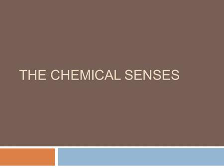 THE CHEMICAL SENSES. Overview of Questions  Why is a dog's sense of smell so much better than a human's?  Why does a cold inhibit the ability to taste?