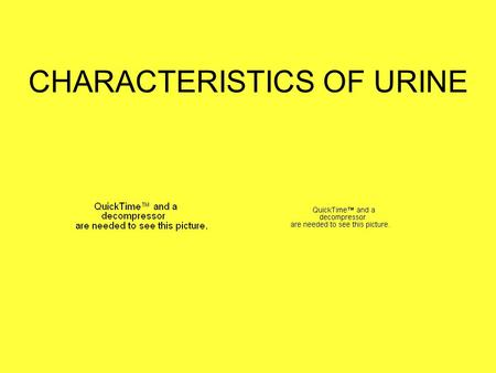 CHARACTERISTICS OF URINE. Urinalysis 1.Physical characteristics: color, odor, turbidity, volume, & specific gravity 2.Chemical characteristics: pH, glucose,