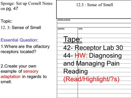 Sponge: Set up Cornell Notes on pg. 47