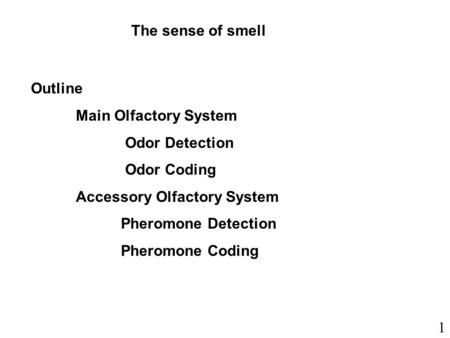 The sense of smell Outline Main Olfactory System Odor Detection Odor Coding Accessory Olfactory System Pheromone Detection Pheromone Coding 1.