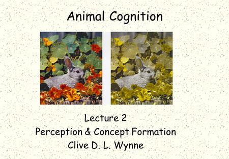 Animal Cognition Lecture 2 Perception & Concept Formation Clive D. L. Wynne.
