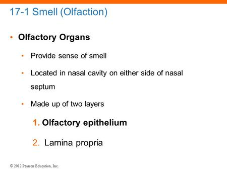 © 2012 Pearson Education, Inc. 17-1 Smell (Olfaction) Olfactory Organs Provide sense of smell Located in nasal cavity on either side of nasal septum Made.